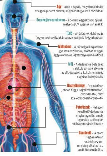 amit férgeknek hívnak az emberi testben a helminthiasis fogalma